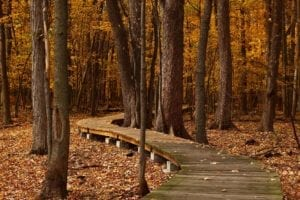 fall path forest